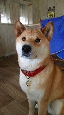 f:id:dog_life_saving:20170131133111j:image