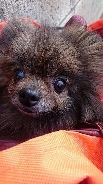 f:id:dog_life_saving:20170131133117j:image