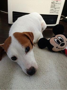 f:id:dog_life_saving:20170322140902j:image
