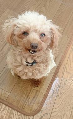 f:id:dog_life_saving:20170322151537j:image