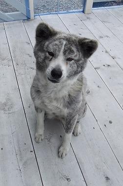 f:id:dog_life_saving:20170329133715j:image