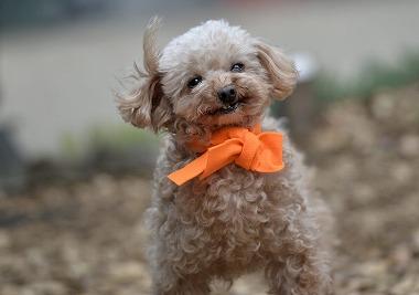 f:id:dog_life_saving:20170501154010j:image