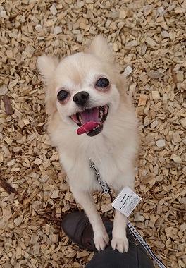 f:id:dog_life_saving:20170501154107j:image