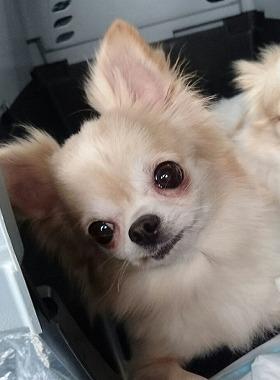 f:id:dog_life_saving:20170501154108j:image