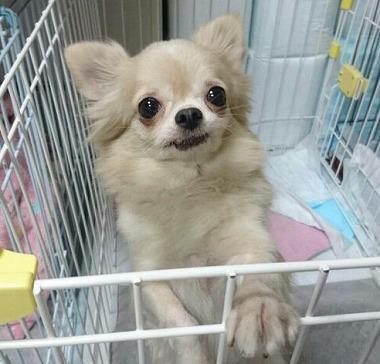 f:id:dog_life_saving:20170501154109j:image