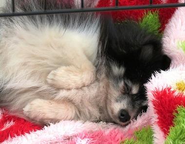 f:id:dog_life_saving:20170501154113j:image