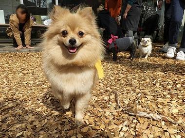 f:id:dog_life_saving:20170501154118j:image