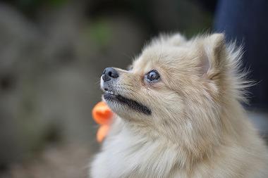 f:id:dog_life_saving:20170501154120j:image