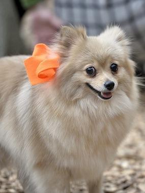 f:id:dog_life_saving:20170501154121j:image