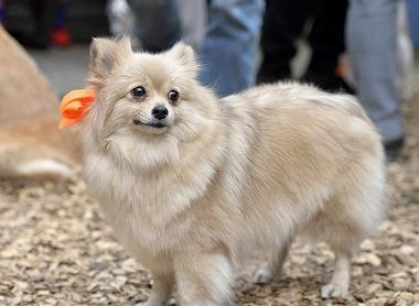 f:id:dog_life_saving:20170501154122j:image