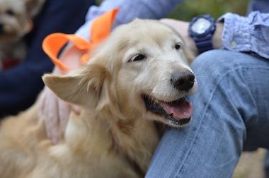 f:id:dog_life_saving:20170501154129j:image