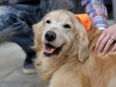 f:id:dog_life_saving:20170501154132j:image