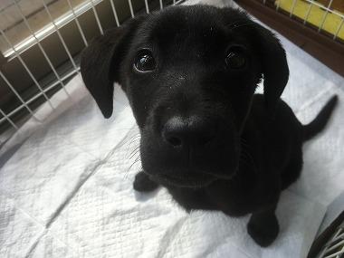 f:id:dog_life_saving:20170507091055j:image