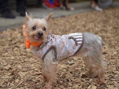 f:id:dog_life_saving:20170507122547j:image