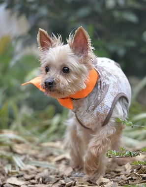 f:id:dog_life_saving:20170507122548j:image