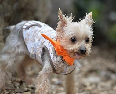 f:id:dog_life_saving:20170507122549j:image