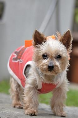 f:id:dog_life_saving:20170507122555j:image
