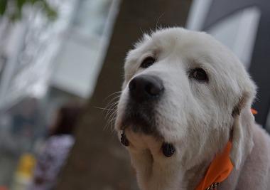 f:id:dog_life_saving:20170507123547j:image
