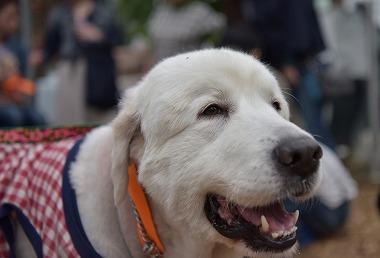 f:id:dog_life_saving:20170507123552j:image