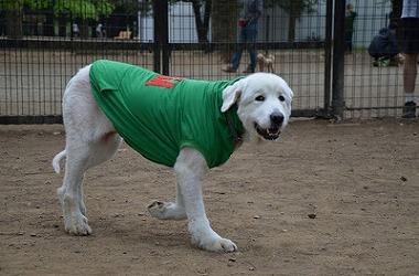 f:id:dog_life_saving:20170507123553j:image