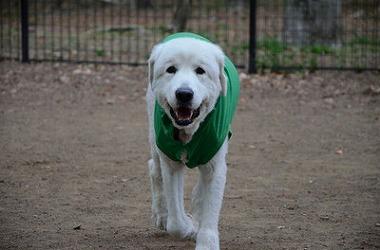 f:id:dog_life_saving:20170507123554j:image