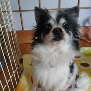 f:id:dog_life_saving:20170507124845j:image