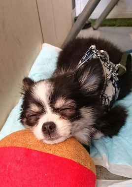 f:id:dog_life_saving:20170508145128j:image