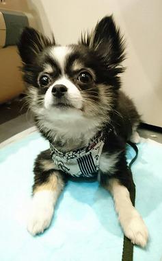 f:id:dog_life_saving:20170508145129j:image