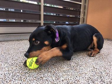f:id:dog_life_saving:20170508145130j:image