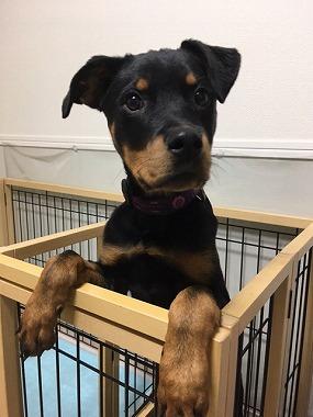 f:id:dog_life_saving:20170508145131j:image