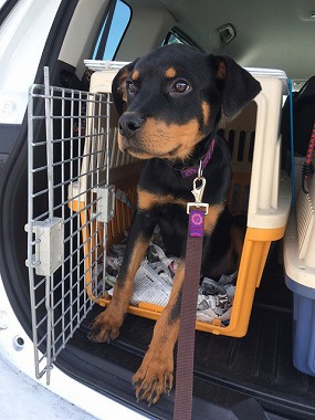 f:id:dog_life_saving:20170508145133j:image