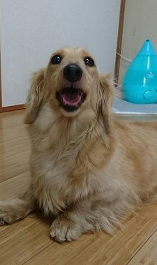 f:id:dog_life_saving:20170524103512j:image