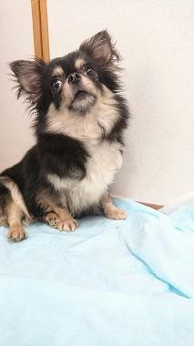 f:id:dog_life_saving:20170525140040j:image