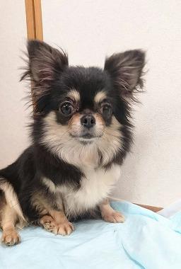f:id:dog_life_saving:20170525140041j:image