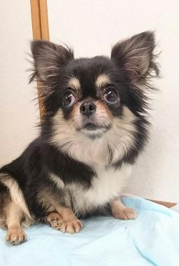 f:id:dog_life_saving:20170525140042j:image