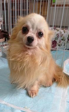 f:id:dog_life_saving:20170525140043j:image