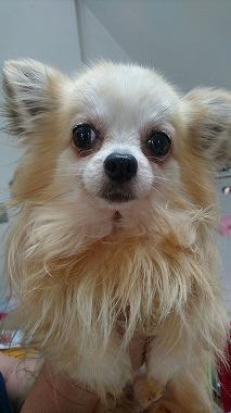 f:id:dog_life_saving:20170525140045j:image