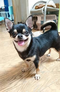 f:id:dog_life_saving:20170525140046j:image