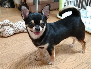 f:id:dog_life_saving:20170525140047j:image