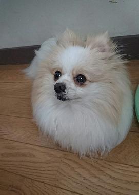 f:id:dog_life_saving:20170525140049j:image