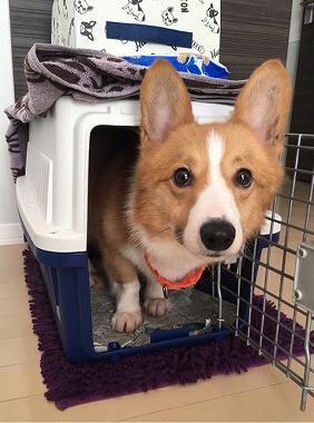 f:id:dog_life_saving:20170526145004j:image