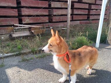 f:id:dog_life_saving:20170526145010j:image