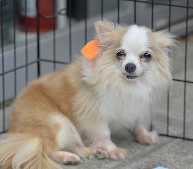 f:id:dog_life_saving:20170531113430j:image