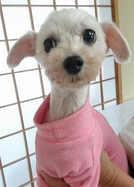 f:id:dog_life_saving:20170713153931j:image