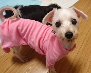 f:id:dog_life_saving:20170713153932j:image