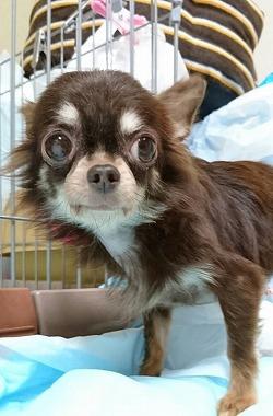 f:id:dog_life_saving:20170713153934j:image
