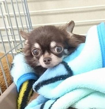 f:id:dog_life_saving:20170713153938j:image