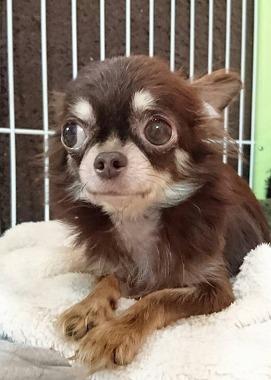 f:id:dog_life_saving:20170713153939j:image