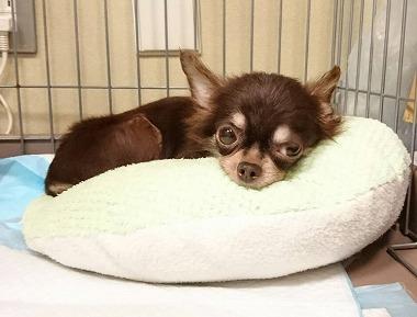 f:id:dog_life_saving:20170713153940j:image