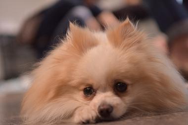 f:id:dog_life_saving:20170714145132j:image